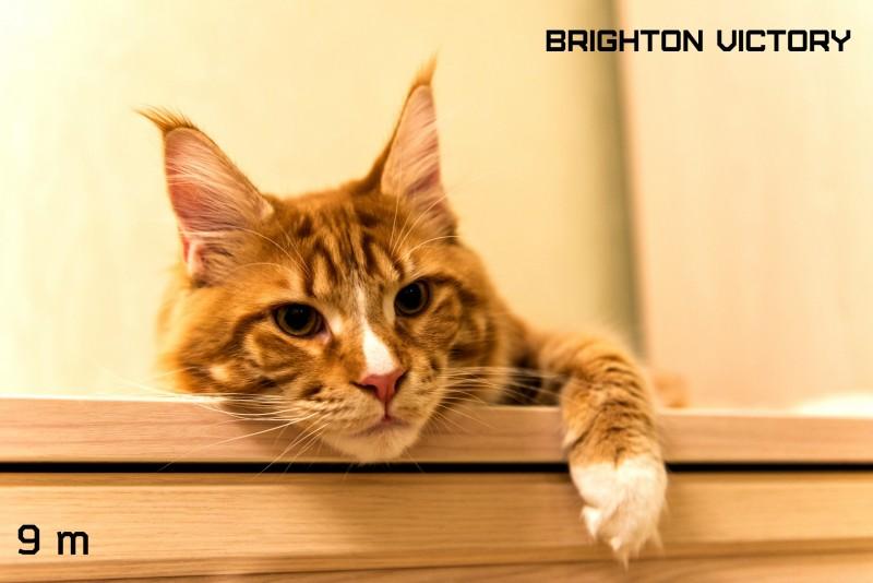 Brighton VICTORY, 9 месяцев