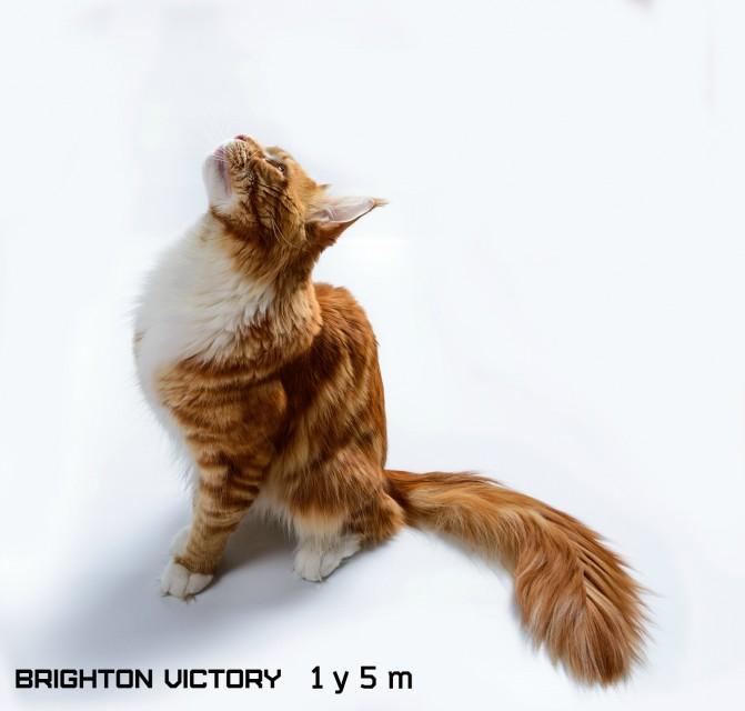 Brighton VICTORY