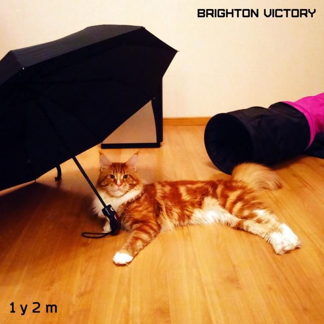 Brighton VICTORY, 1 год и 2 месяца