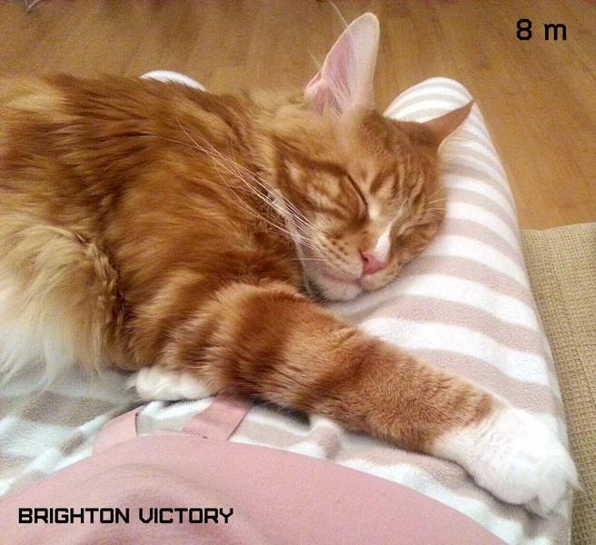 Brighton VICTORY, 8 месяцев
