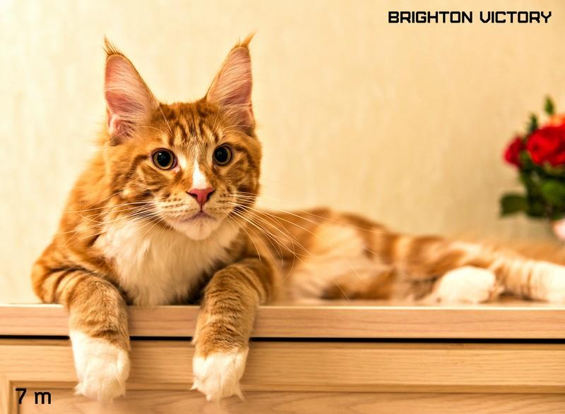 Brighton VICTORY, 7 месяцев