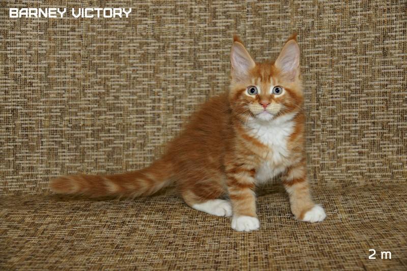 Barney VICTORY, 2 месяца