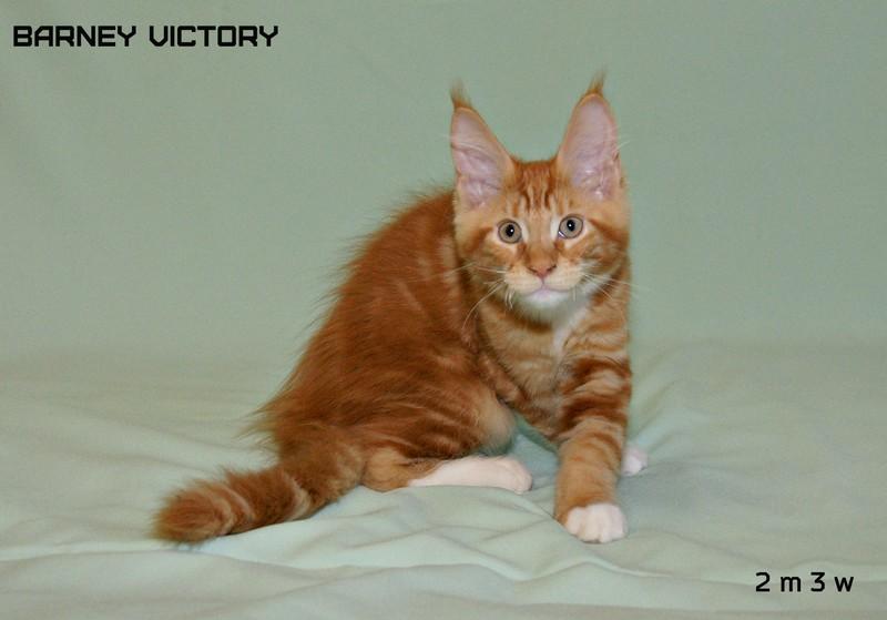 Barney VICTORY, 2 месяца 3 недели
