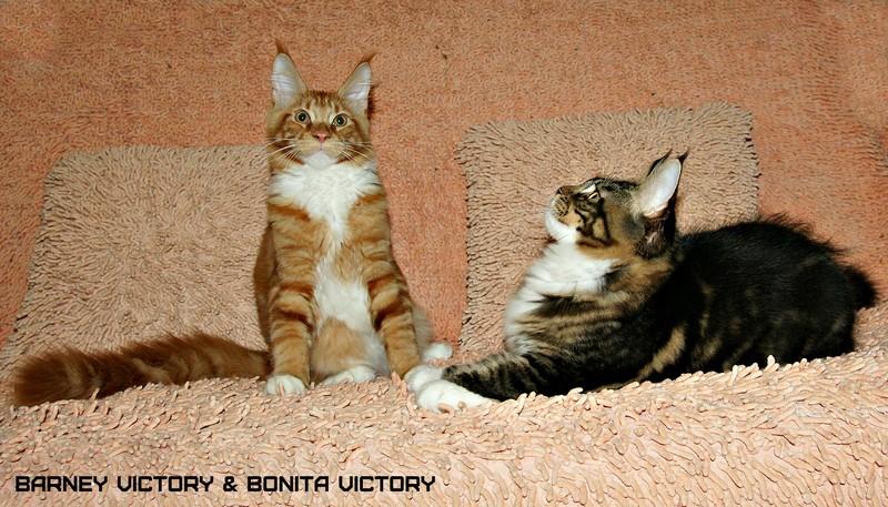 Barney VICTORY, 4,5 месяца