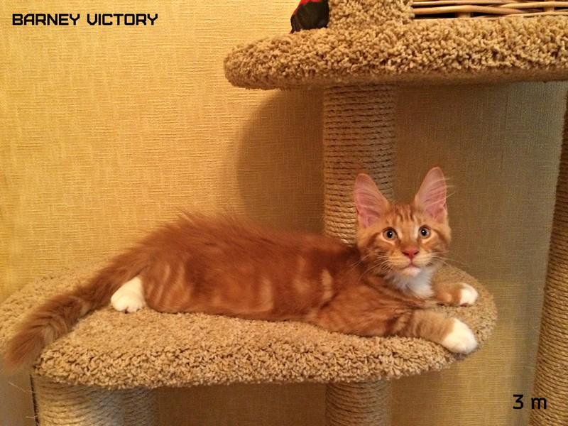 Barney VICTORY, 3 месяца