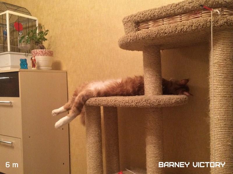 Barney VICTORY, 6 месяцев