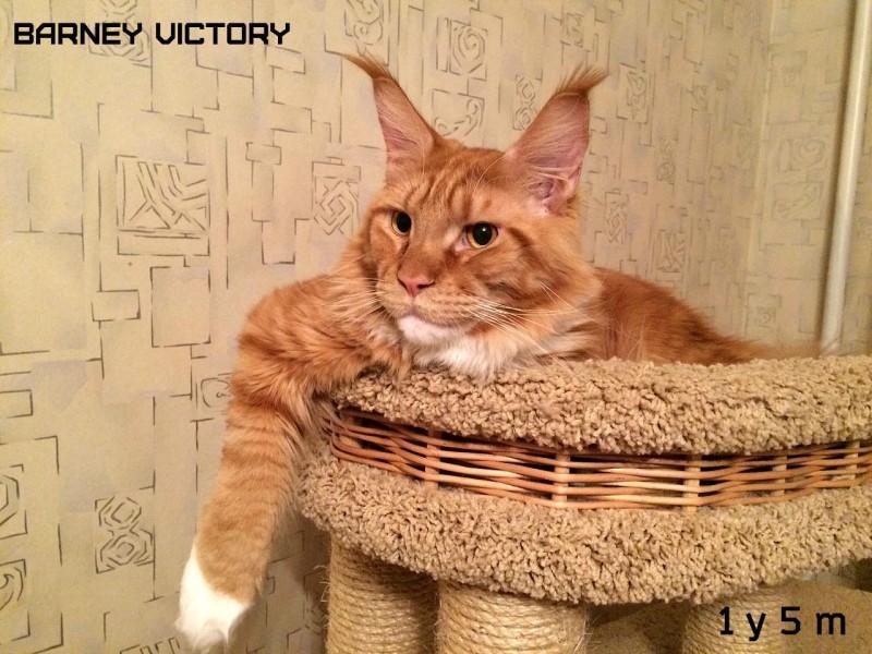 Barney Victory, год и 5 месяцев