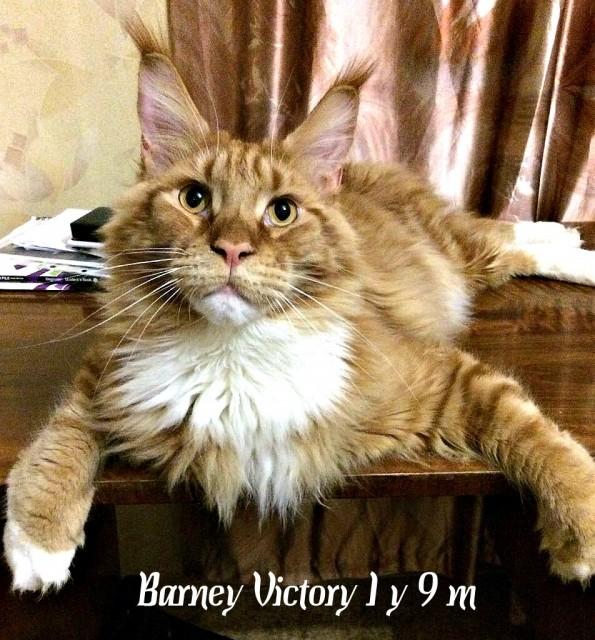 Barney Victory, год и 9 месяцев