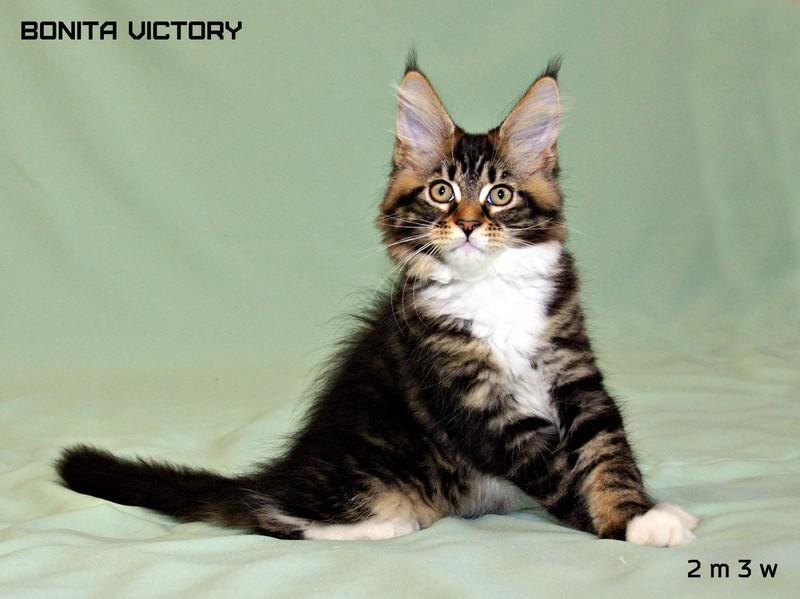Bonita VICTORY, 2 месяца 3 недели