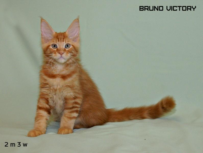 Bruno VICTORY, 2 месяца 3 недели