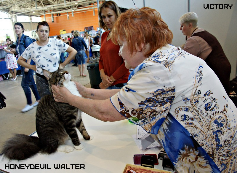 HoneyDevil Walter, VICTORY, Инфо-кот 2015