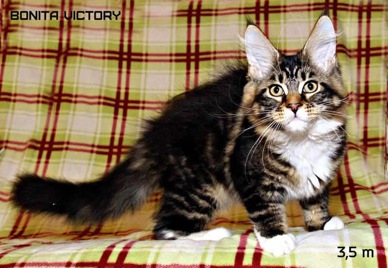 Bonita VICTORY, 3,5 месяца
