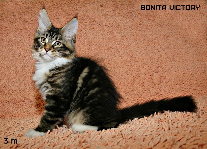 Bonita VICTORY, 3 месяца