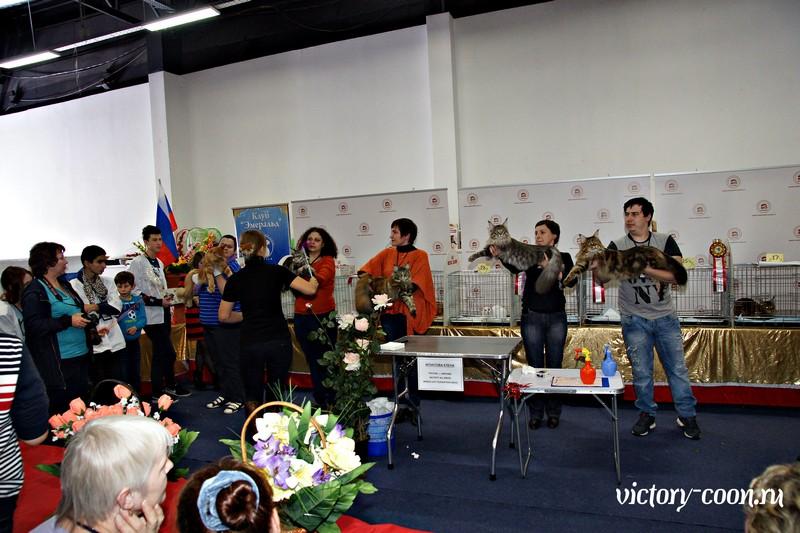 Золотая коллекция, 10-11 октября, Зоомир, VICTORY