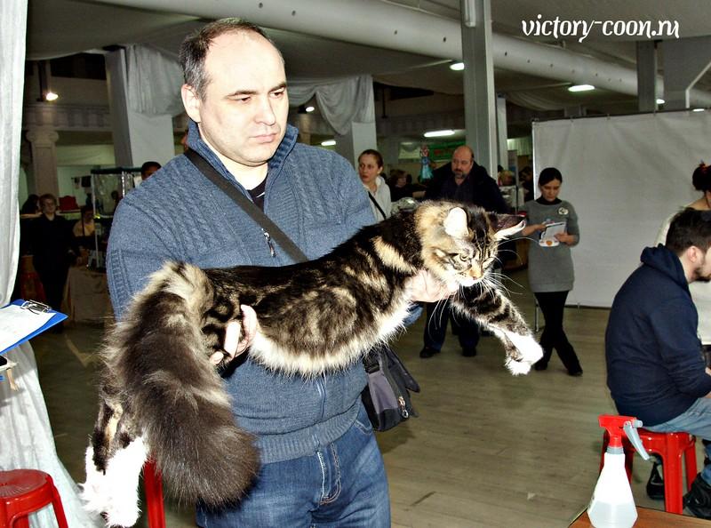 """""""РосКошная зима в Сокольниках"""", 30-31 января 2016 г., Victory"""