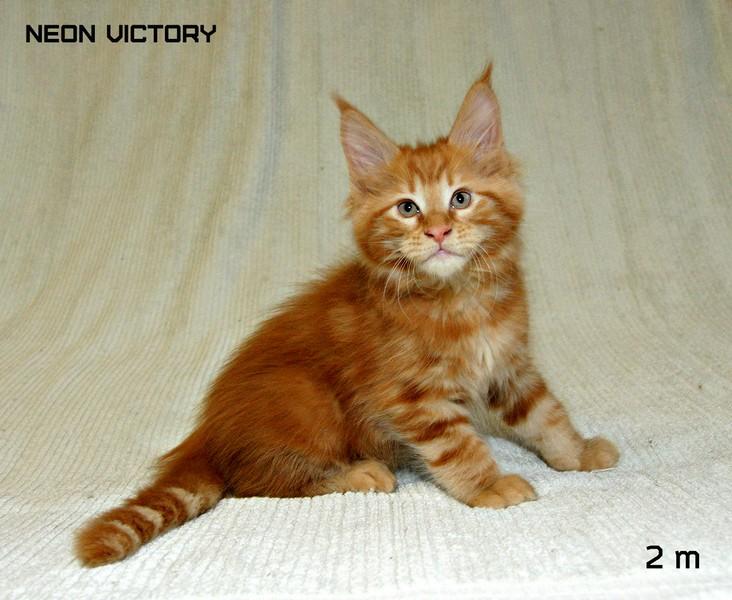 NEON VICTORY, 2 месяца