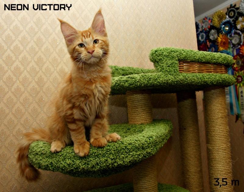 NEON VICTORY, 3,5 месяца