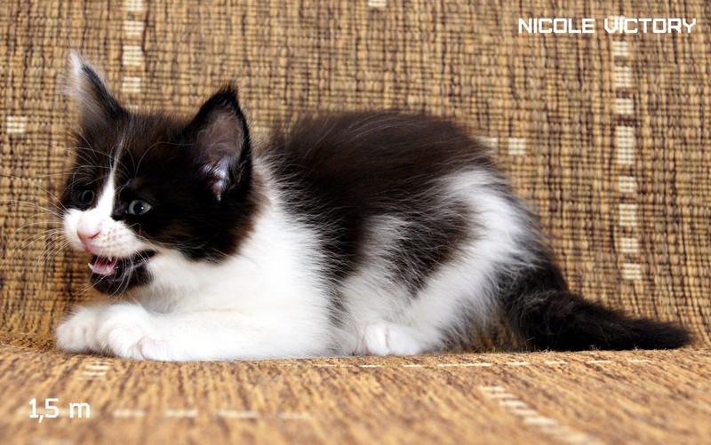 NICOLE VICTORY, 1,5 месяца