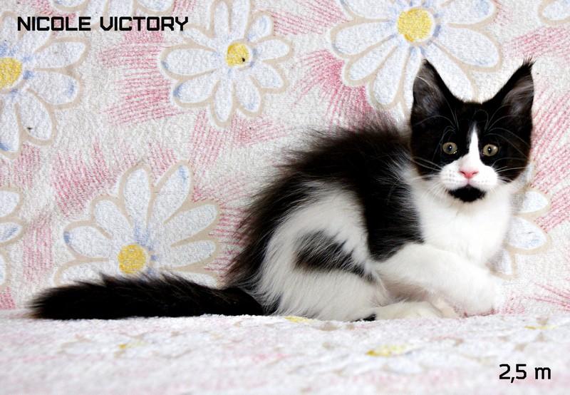 NICOLE VICTORY, 2,5 месяца