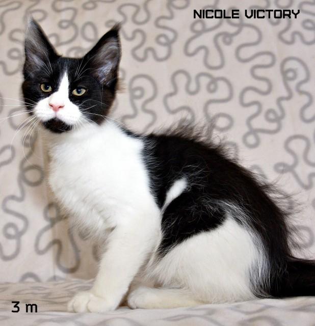 NICOLE VICTORY, 3 месяца