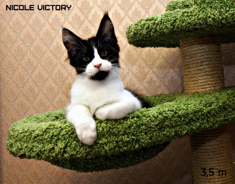 NICOLE VICTORY, 3,5 месяца