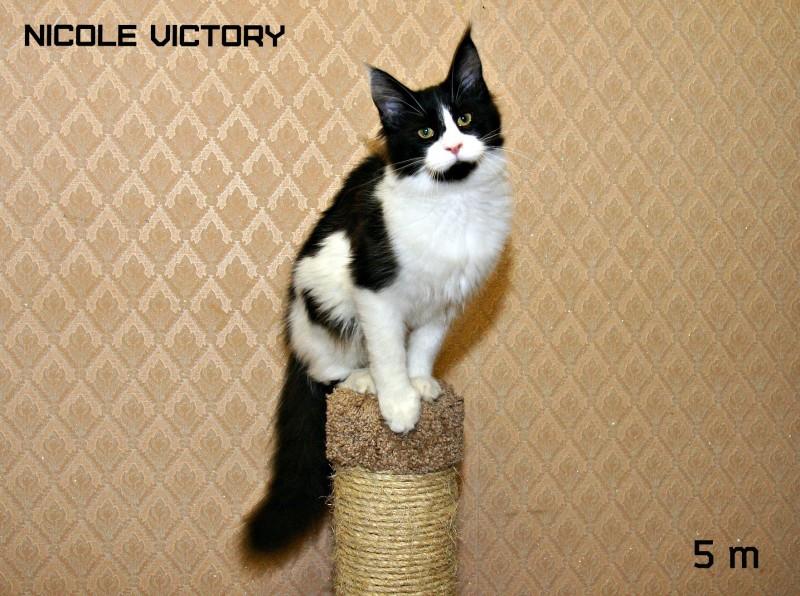 NICOLE VICTORY, 5 месяцев