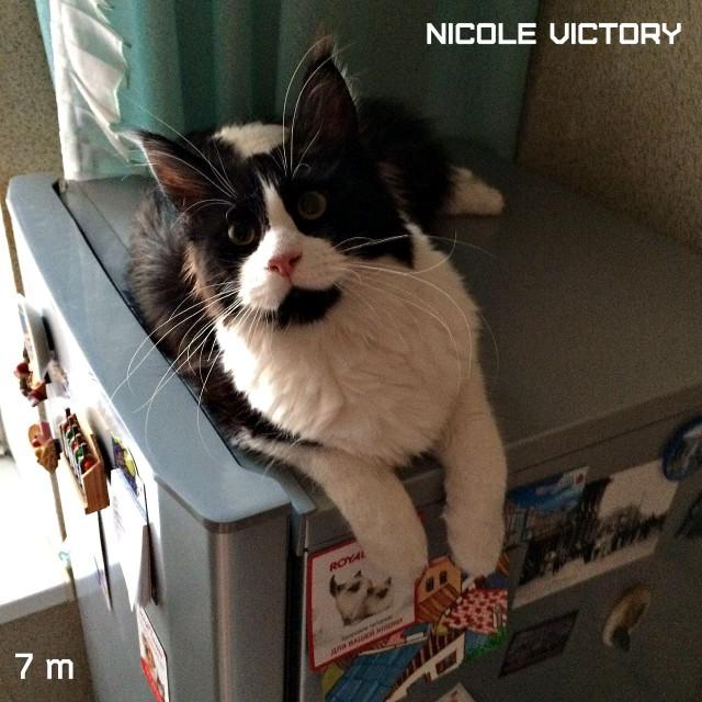NICOLE VICTORY, 7 месяцев