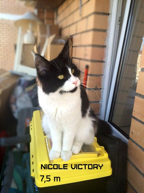 NICOLE VICTORY, 7,5 месяцев