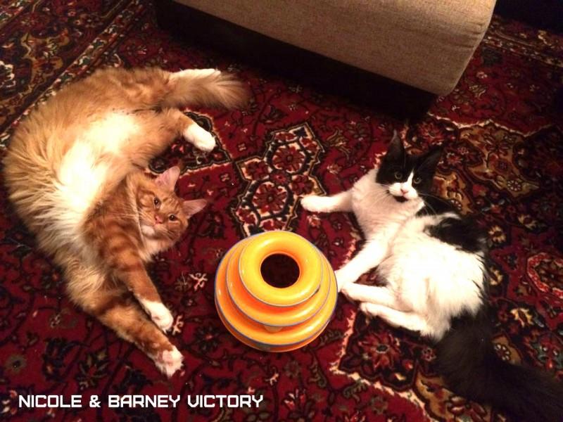 NICOLE & BARNEY VICTORY, 7,5 месяцев, 1 год 2 месяца
