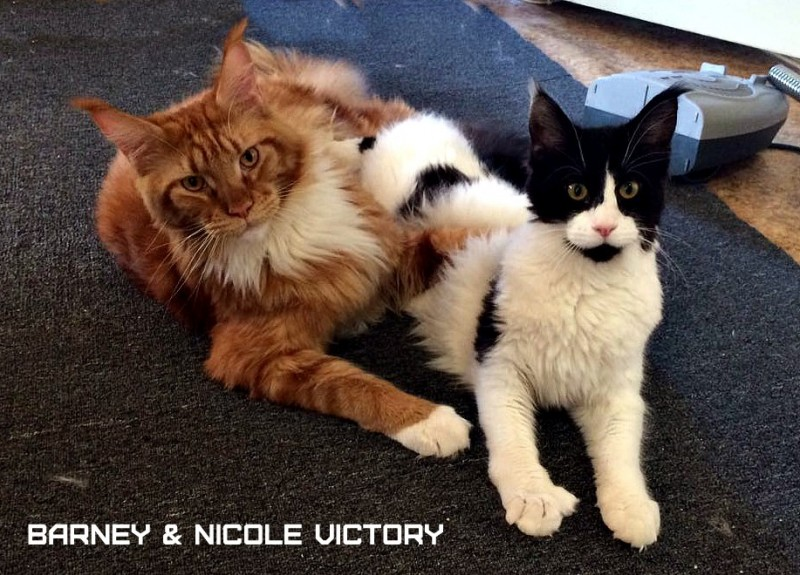 Barney and NICOLE VICTORY