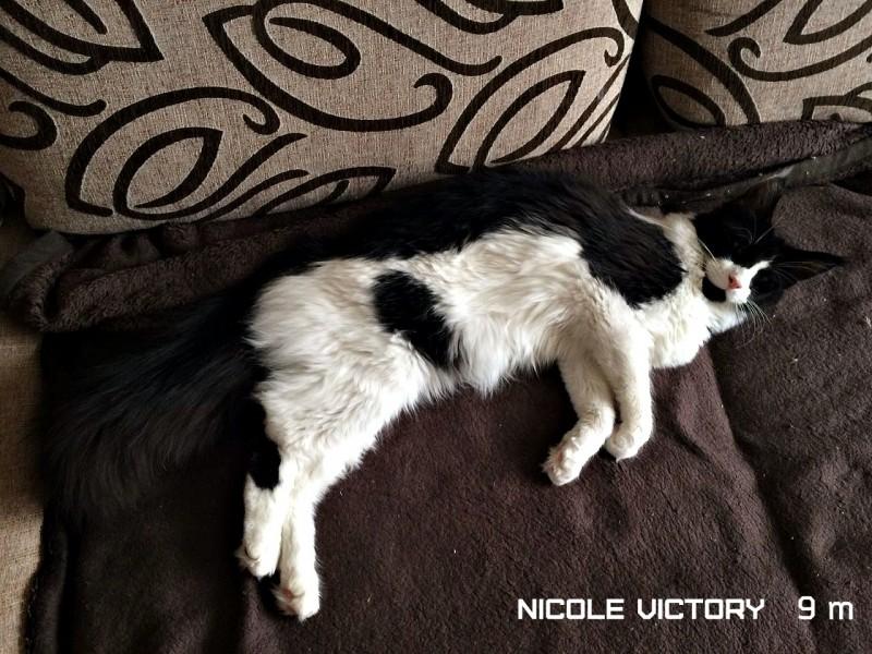 NICOLE VICTORY, 9 месяцев