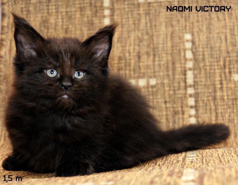 NAOMI VICTORY, 1,5 месяца