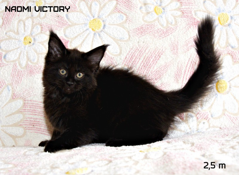 NAOMI VICTORY, 2,5 месяца