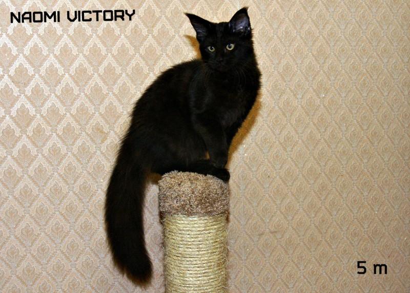 NAOMI VICTORY, 5 месяцев
