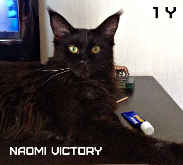 NAOMI VICTORY, 12 месяцев