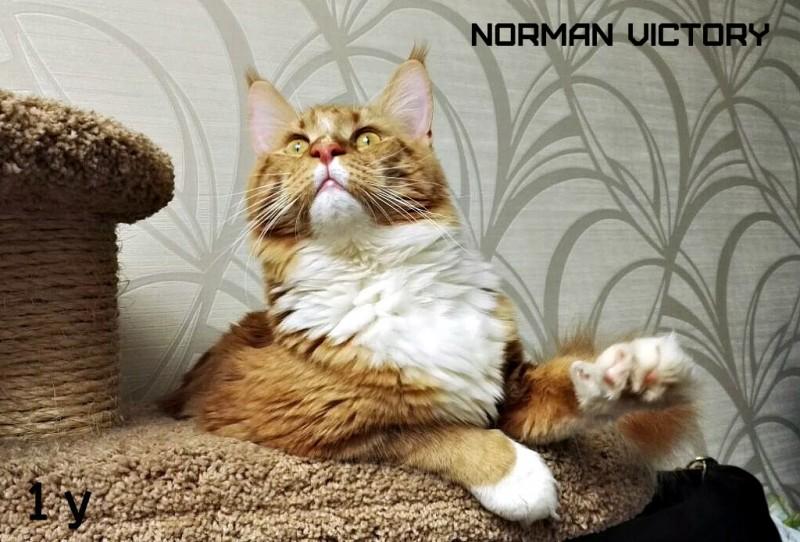 NORMAN VICTORY, 12 месяцев