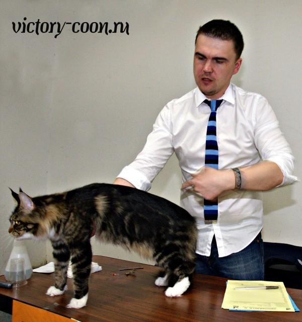 "Bonita Victory, 1-2 мая 2016 ""Мир, кот, май"""