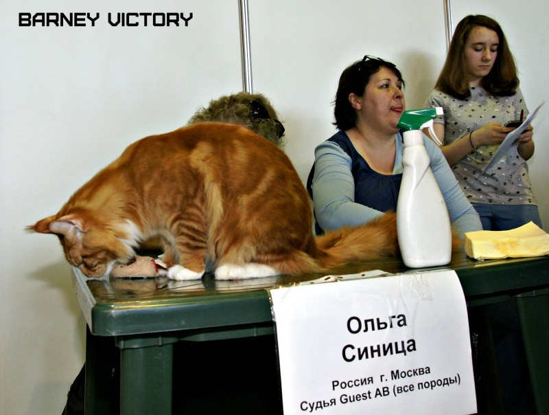 """Barney Victory, 7-9 мая 2016 """"Лучший весенний кот - 2016"""""""