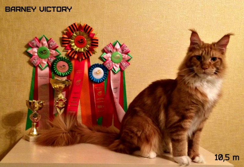 Barney Victory, 10,5 месяцев