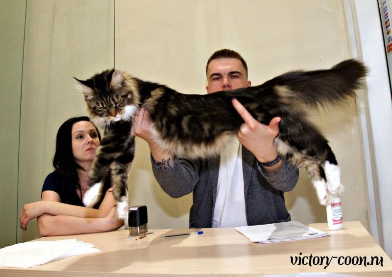 Bonita Victory, 14-15 мая 2016, Ярославль