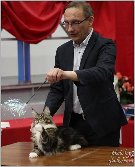 Bonita Victory, 28-29 мая 2016, Бомонд кошек - 2016