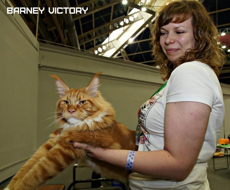 Barney Victory, 28-29 мая 2016, Бомонд кошек - 2016