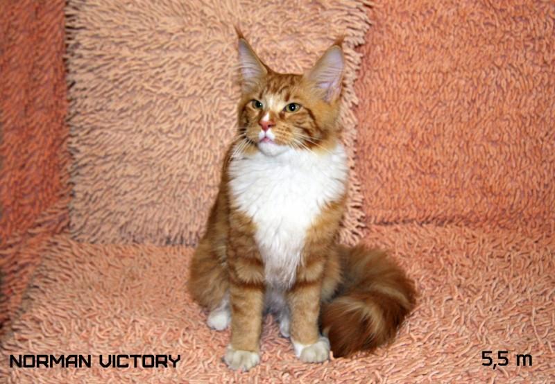 NORMAN VICTORY, 5,5 месяцев
