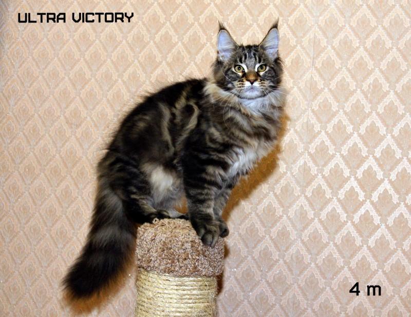 Ultra Victory, 4 месяца