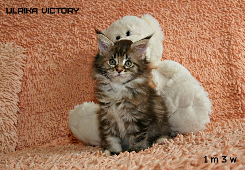 Ulrika Victory, 1 m 3 w