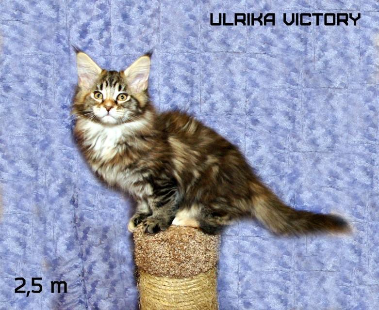 Ulrika Victory, 2,5 m