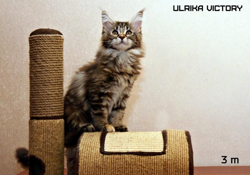 Ulrika Victory, 3 m