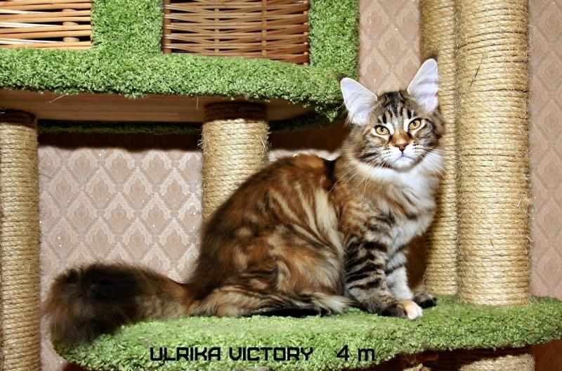 Ulrika Victory, 4 m