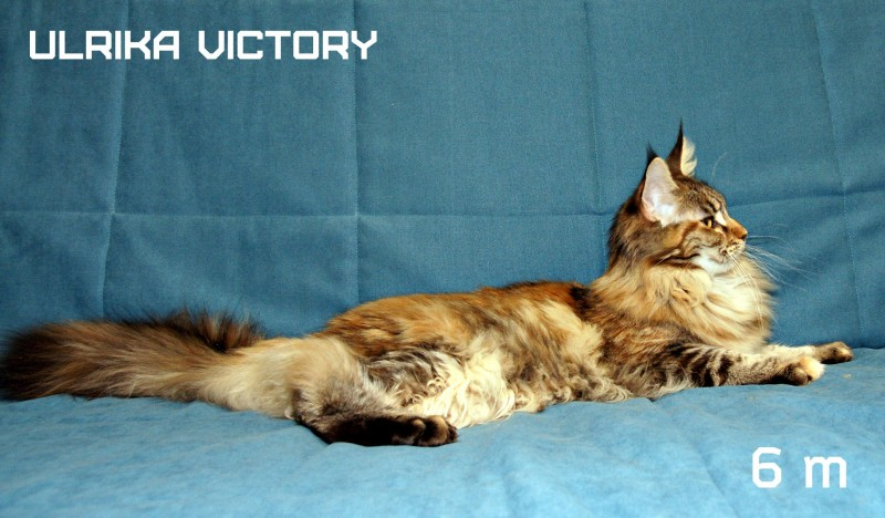Ulrika Victory, 6 m