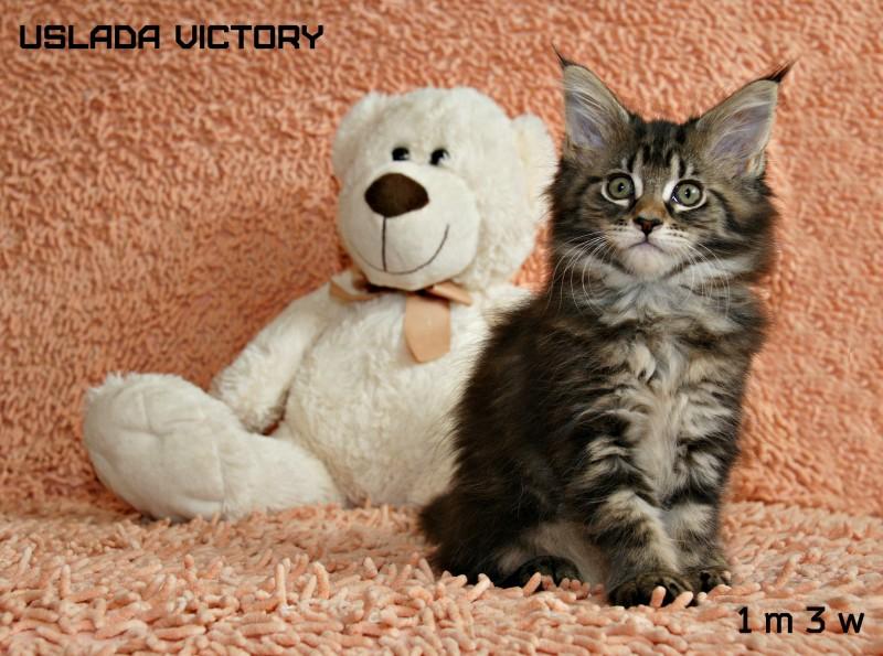 Uslada Victory, 1 m 3 w